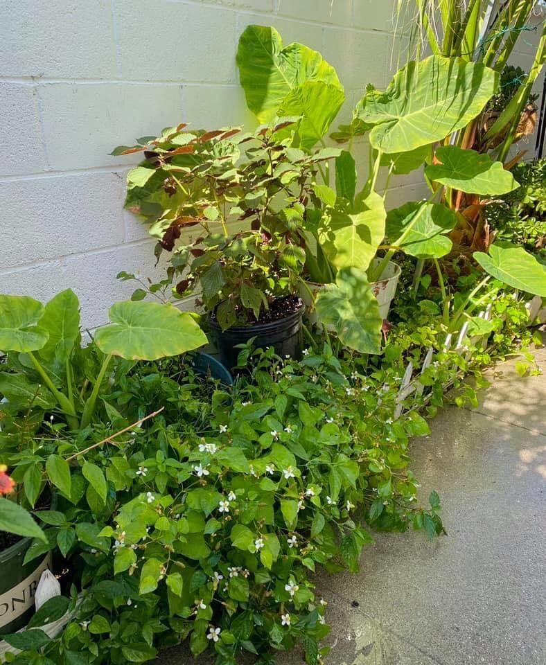 Khu vườn 'trong mơ' rực rỡ bốn mùa rộng 300m2 của mẹ Việt tại Mỹ