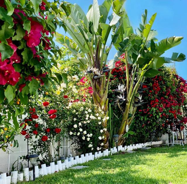 Khu vườn rộng 300 m2 của mẹ Việt ở Mỹ khiến bao người mê mẩn - 2