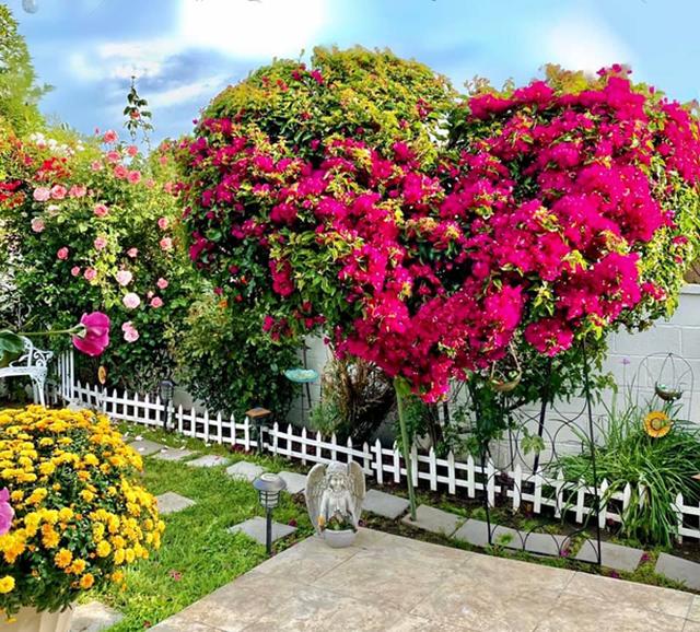 Khu vườn rộng 300 m2 của mẹ Việt ở Mỹ khiến bao người mê mẩn - 4