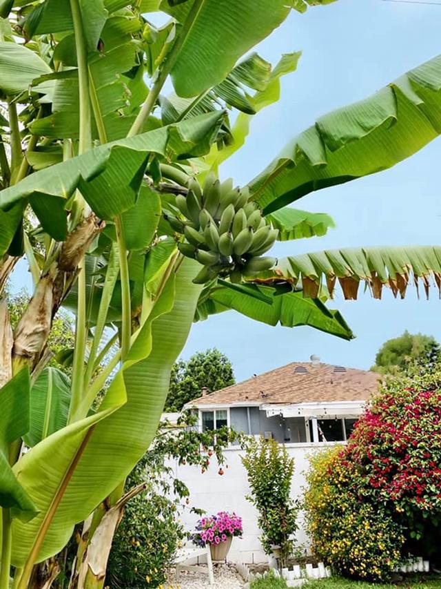 Khu vườn rộng 300 m2 của mẹ Việt ở Mỹ khiến bao người mê mẩn - 5